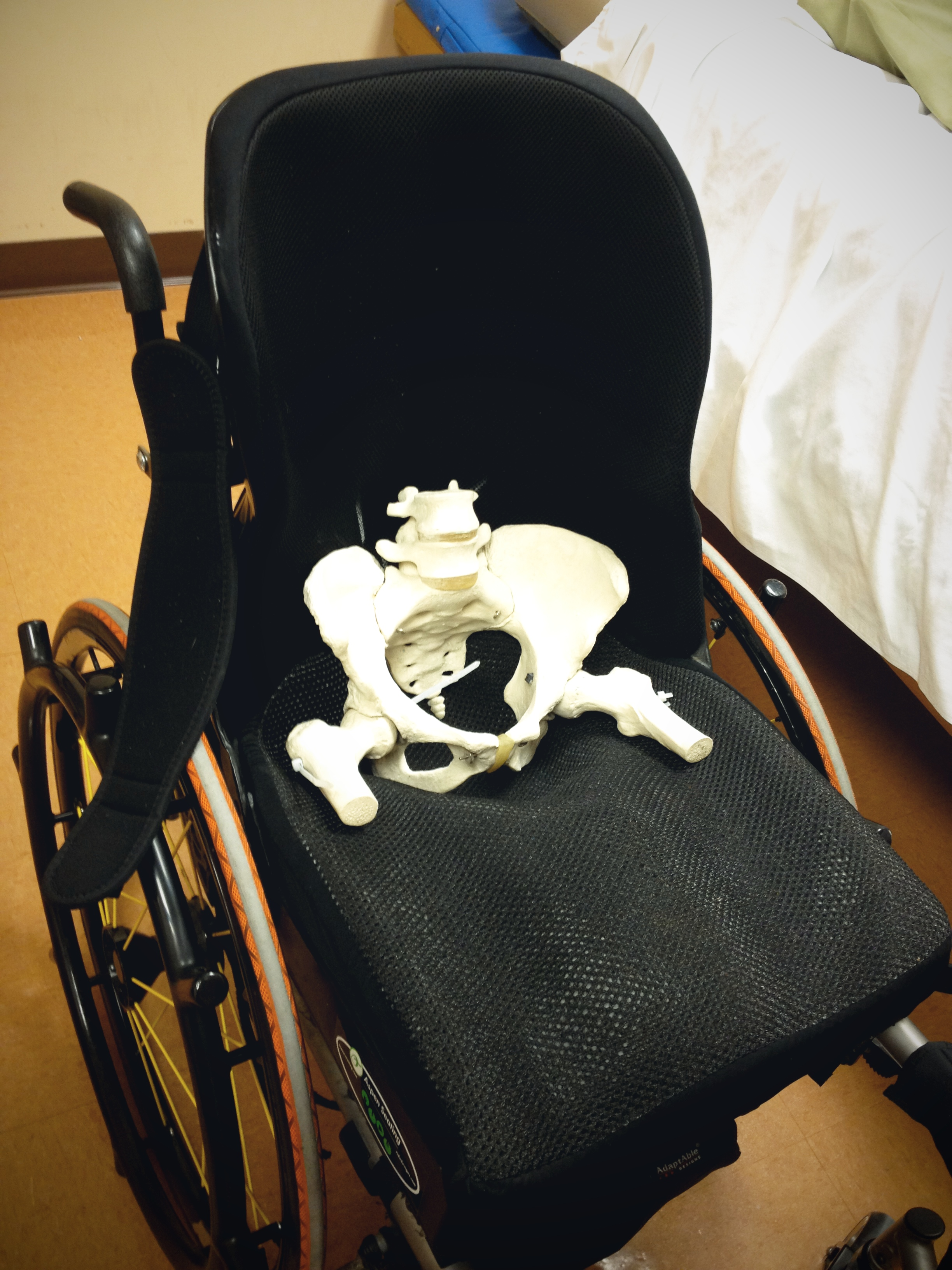 Skeleton of pelvis sitting in my wheelchair